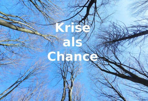 Bäume und Blick in den Himmel - Krise als Chance