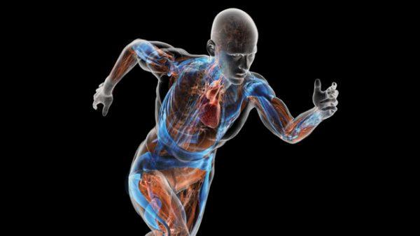 Gesunde Gefäße mit diesem Gefäßtraining: Anatomie in Bewegung