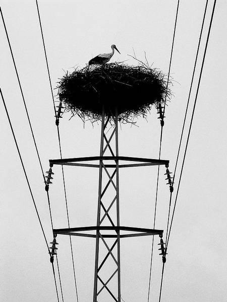 Storchennest auf einem Mast mit Mittelspannungsfreileitungen und der Gefahr eines Erdschlusses