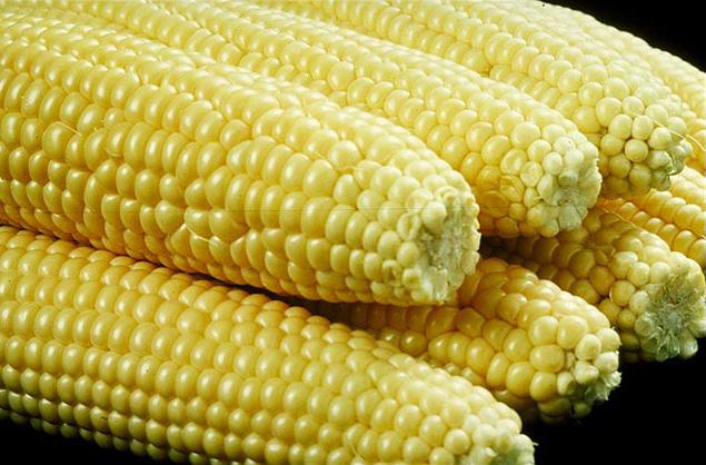 Maiskolben aus den USA