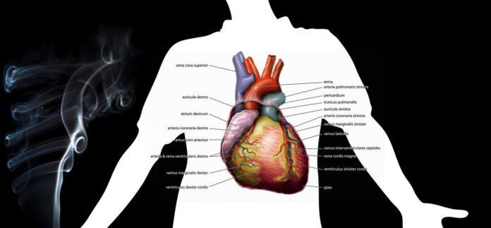 Raucherkrankheiten im Herz-Kreislauf-System mit Zigarettenrauch
