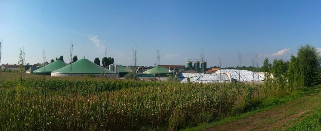 Biomasse wird als Energiequelle zusätzlich an Bedeutung gewinnen - doch wie sieht es beim Ökostrom tatsächlich mit der Nachhaltigkeit aus?