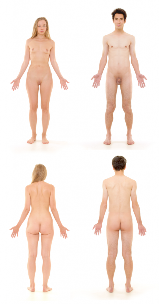 Menschlicher Körper: Frau und Mann, von vorne und hinten betrachtet