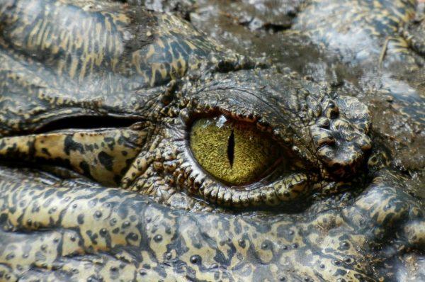 Reptiloide Erkennen