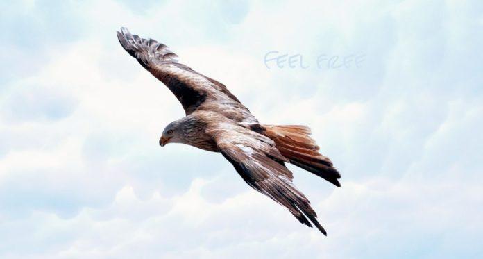 Freiheit - Frei wie der Adler