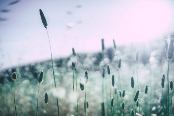 Allergien durch Gräser, Blüten oder Pollen?