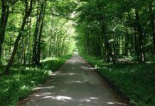 Weg durch den Wald - Waldweg