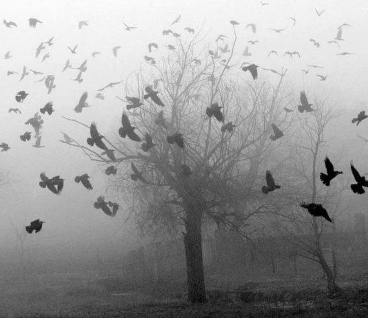 Vögel fliegen um leeren Baum im Winter