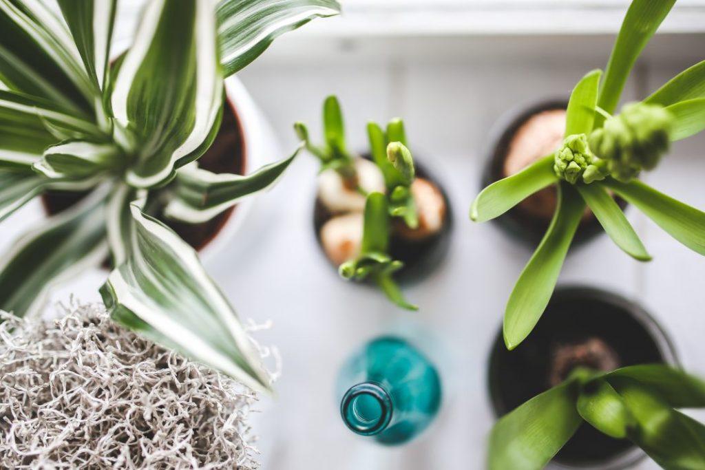 4 Pflanzen Im Schlafzimmer Fur Einen Guten Schlaf