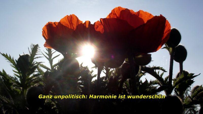Schlußbild-Harmonie