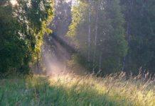 Vom Schatten ins Licht